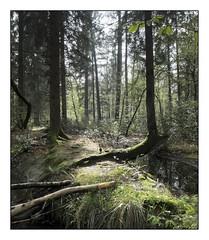 Aprs la pluie (Oeil de chat) Tags: lumire arbres fujifilm couleur fort x20 douceur sousbois