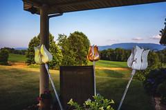Three Fake Tulips (ditch Mingo) Tags: pointshoot summerdays rx100 sonyrx100 ditchmingo threefaketulips