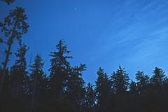 Rising Jupiter (ShannonElisabeth) Tags: california statepark park trees nature silhouette northerncalifornia forest lost evening coast humboldt twilight haze nikon raw trinidad redwoods norcal jupiter dslr humboldtcounty patrickspoint lostcoast rawimage thelostcoast d5500 skyfall nikonphotographer nikonphotography nautrephotography redwoodcurtain nikond5500
