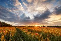 Touch of summer - 2016 (Gruenewiese86) Tags: sunset summer sky sun field clouds canon germany landscape sonnenuntergang sommer explore german poppy poppies tamron landschaft harz haida mohn 2016 mohnfeld sachsenanhalt exploreharz