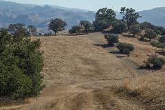 Pleasanton Ridge Regional Park (silkylemur) Tags: sanfrancisco california northerncalifornia canon lens unitedstates hiking sanfranciscobayarea eastbay fullframe canoneos pleasanton hikingtrail zoomlens sunol llens 24105mm canonef canonef24105mmf4l canonef24105mmf4lisusm  pleasantonridgeregionalpark eflens eastbayregionalpark canonef24105mmf4lisusmlens efmount canoneos6d