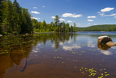 Shallow Lake and Eastern Elliptio Freshwater Mussels (Matt Champlin) Tags: travel camping fish ny canon fishing hiking adirondacks biology adk pristine iloveny 2016 freshwatermussel shallowlake freshwaterclams brownstractpond easternelliptio
