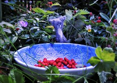 ...and feed upon Strawberries, Sugar and... (pianocats16, miau...) Tags: cute felted cat garden handmade kitty strawberries bowl figure