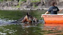 20160705095968 (koppomcolors) Tags: horse hst koppomcolors