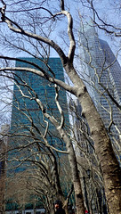 Bones of Bryant Park before leaves 4/7/13 (catchesthelight) Tags: park nyc urban newyork skyscrapers manhattan branches oasis trunks bryantpark baretrees