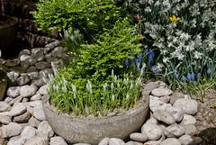 flowers (gregork.) Tags: spring maj 2013 pomlad mozirje mozirskigaj