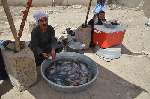 A Fish trader in Egypt. Photo by Jens Peter Tang Dalsgaard, 2013.