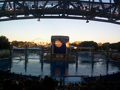 DCP00750 (d_murphy52) Tags: seaworld