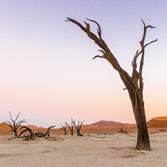 Faces of Deadvlei 2 (Gies! (back home, trying to catch up)) Tags: deadvlei namibie