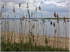 Through the Reeds (Photogriffo) Tags: uk sea seascape coast jetty coastal dorset arne peninsula channel poole wareham hamworthy