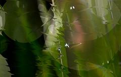 liquify chive (pete ware) Tags: water nikon droplet organic wacom chive liquify photoshopcs5 peteware
