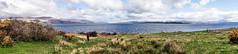 Isle Of Mull - Image 21 (www.bazpics.com) Tags: trip vacation holiday nature landscape island scotland scenery may scottish inner western mull isle isles hebrides 2013 barryoneilphotography