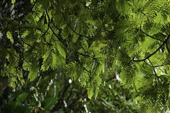 Jardim Botnico do Rio de Janeiro | 130716-7236-jikatu (jikatu) Tags: brazil rio brasil nikon jardin botanico d800 riodejanerio jikatu d800e nikond800e braziljuly2013