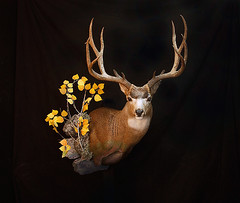 "Animal Art Taxidermy • <a style=""font-size:0.8em;"" href=""http://www.flickr.com/photos/27376150@N03/9351073945/"" target=""_blank"">View on Flickr</a>"