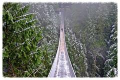 Capilano Suspension Bridge (James Patterson) Tags: winter canada vancouver forest canon river cool bc britishcolumbia northvancouver capilano 100club northvan jamespatterson capilanoriver blueribbonwinner leadingline 50club 50clubxcalidad vanishingpont ilovemypic naturewatcher scenicsnotjustlandscapes