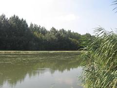 Reka Begej (Goran Necin) Tags: river serbia vojvodina srbija banat reka reke begej čamac zrenjanin ribolov trska gorannecin stajićevo