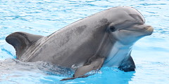Ping (EchoBeluga) Tags: marine dolphin kingdom center flags atlantic research six discovery bottlenose