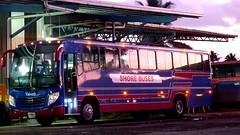 YAWEH (titifanua) Tags: bus fiji hino metrobus yaxing js6100g shorebuses