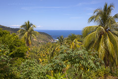 Merinkym - Ocean View (ikithule) Tags: ocean sea forest landscape rainforest jungle palmtree atlanticocean meri maisema mets dominica maisemakuva caribbeanislands sademets palmu viidakko ikithule atlanninvaltameri