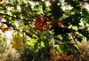 belonging... (♥Adriënne - for a better and peaceful world -) Tags: autumn sunlight thenetherlands autumnleaves noordbrabant ulvenhout panasonictz5 addyvanrooij abokehoflight lovelymotherearth ♥adriënne greenbeautyforlife