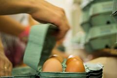 af1310_0569 (Adriana Fchter) Tags: food brown easter hands farm comida egg manos caixa mano eggs job huevo trabalho maos granja ovo ovos avicola embalagem produo classificar produao duzia produzir classificaao