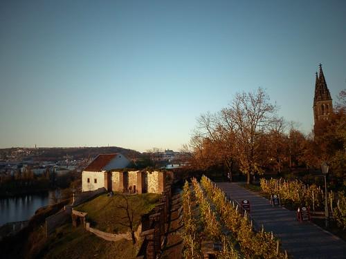 Vignes, Prague, République Tchèque