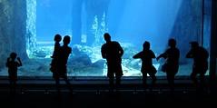 Sydney (CarloAlessioCozzolino) Tags: people zoo aquarium sydney australia persone acquario tarongazoo