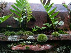Urban cliff top Watercolour (Durley Beachbum) Tags: brick wall moss lichen ferns ecosystem