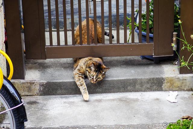 Today's Cat@2013-12-23