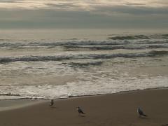 En la playa.On the beach (joseluisggzz) Tags: travel espaa bird beach landscape spain playa olympus aves viajes sitges joseluis