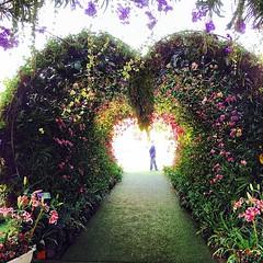 ทางเข้างานดอกไม้งามเชียงรายเป็นรูปหัวใจประดับด้วยกล้วยไม้สวยมากๆ #chiangrai #thailand #mayflashfly #kinbinnon