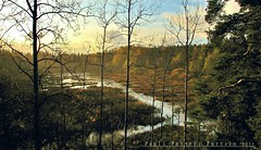 Finnish swamp '11 (PPP-from 2011 to present) Tags: rain espoo suomi finland swamp keskuspuisto suo mossenkrr paulipetteripurtilo
