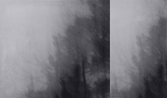 140206 (eevarita) Tags: trees sky 50mm diptych 365 icm 50mmf18 project365 365project intentionalcameramovement