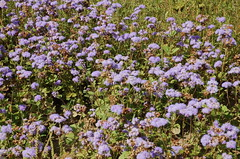 "Delano Farm Flowers <a style=""margin-left:10px; font-size:0.8em;"" href=""http://www.flickr.com/photos/91915217@N00/12450286843/"" target=""_blank"">@flickr</a>"