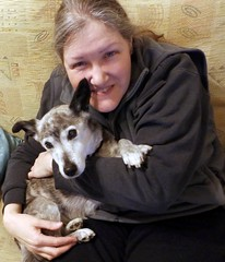 26th Feb Susie & me (Cardedfolderol) Tags: pets cute dogs fur cuddle mongrel dogsitting whippetcross