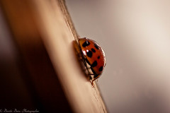 Ladybug and the window.jpg (dadafilm) Tags: blur macro window bug insect ladybug tamron90mmmacro loseup