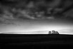 Baumgruppe (StefanB) Tags: sky bw tree monochrome clouds germany landscape deutschland outdoor himmel wolken landschaft bäume treescape ries schwaben 2013 em5 flvonmirikr