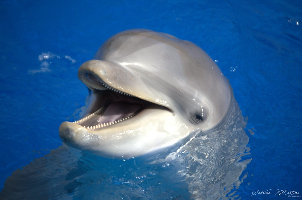 The World's Best Photos of dolfin and dolphin - Flickr ...