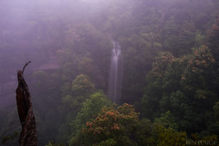 Where witches leap (benpearse) Tags: flowers blue mist mountains wet rain weather misty fog landscape waterfall photographer ben january professional witches raining leap katoomba conditions gully pearse 2015