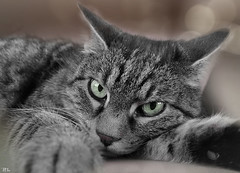 Da kuckste gell...[explore May 17, 2016] (roland_lehnhardt) Tags: portrait blackandwhite bw cat tiere sw katze tier catlover katzenfoto katzenportrait tierportrait cattrait