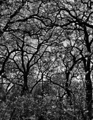 B&W Forest Bidwell 6 (Greg Harder) Tags: bw forest butte chico bidwell 2016 52016