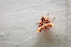 Wandelndes Herbstlaub (UsualRedAnt) Tags: berlin canon kreuzberg germany deutschland natur f16 braun insekt tier schmetterling ef50mmf14usm 70d urbanstr