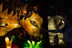 _DSC9507_2 (Elii D.) Tags: light fish flower animal night zoo monkey neon dragons lantern lampion dargon