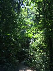 "La Réserve de Monteverde <a style=""margin-left:10px; font-size:0.8em;"" href=""http://www.flickr.com/photos/127723101@N04/26945341565/"" target=""_blank"">@flickr</a>"