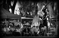 La oscura (Eduardo Amorim) Tags: horses horse southamerica argentina criollo caballo cheval caballos cavalos pferde herd cavalli cavallo cavalo gauchos pferd ayacucho chevaux gaucho cavall  amricadosul gacho amriquedusud provinciadebuenosaires  gachos  sudamrica suramrica amricadelsur sdamerika crioulo caballoscriollos criollos jineteada  tropillas buenosairesprovince americadelsud gineteada tropilhas tropilla crioulos cavalocrioulo americameridionale tropilha caballocriollo eduardoamorim cavaloscrioulos