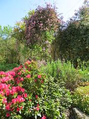Greenbank, May 2016 (alljengi) Tags: sunshine garden spring edinburgh morningside greenbank 2016 greenbankroad
