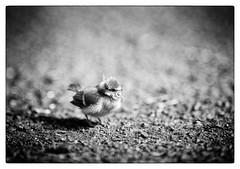 grounded (georgsfoto) Tags: blackandwhite bw monochrome digital rostock meise schwarzweis amboden barnstorferwald d3s afs2002