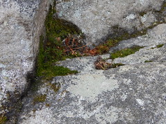 DSCN3677 (shelly_tichy) Tags: frosty february ohiopyle