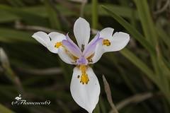 elegancia (Flamenco61) Tags: naturaleza flores garden jardin colores belleza elegancia
