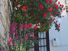 (marirenaa) Tags: trip pink flowers trees plants flower nature greece volos